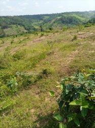 Vente verger 300 ha hévéa - Agboville