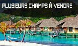 Vente Champ 10 ha - Niamana