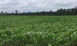Terrains agricoles 10 ha - Agboville