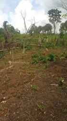 Vente Terrain agricole - Salmoa