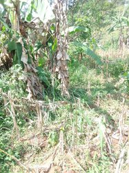 Vente Terrain agricole 35000 m² - Salmao Nkongsamba