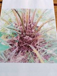 Vente Plantation de palmiers à huile 10ha - Divo