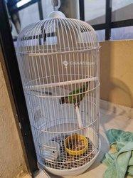 Perroquet Sénégal avec cage