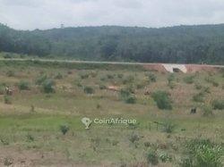 Vente Terrain agricole 5 ha