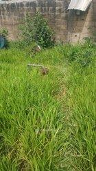 Terrains agricoles 400 m2 - Yopougon