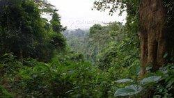 Terrains agricoles 1000 m2   - Bocanda