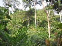 Vente terrains agricoles 1000 ha - Bocanda
