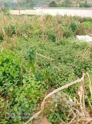 Terrains agricoles - Ovangoul Mbalmayo