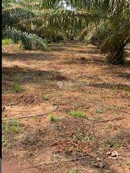 Parecelle agricoles - Allaba