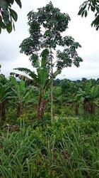 Vente Terrain agricole 7 ha - Bongouanou