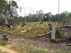 Terrains agricoles 85 ha - Douala