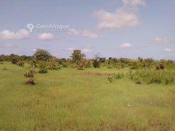 Terrain agricole 4 ha - Safo