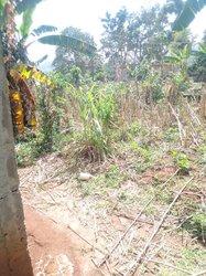 Terrain agricole - Mbalmayo