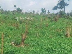 Terrains agricoles 23 ha - Zone Aboudé Mandéké