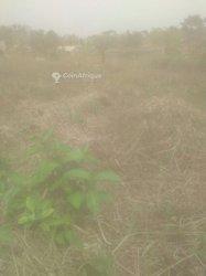 Terrain agricoles 250 m2 - Yaoudé