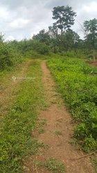 Vente Terrain agricole - Ovangoul Mbalmayo