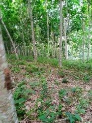 Vente Terrain agricole 245 ha - Agnéby