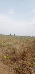 Terrain 137 ha  - Ketou