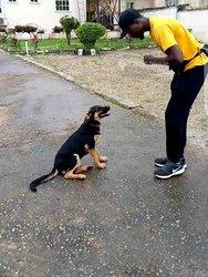 Entretien & éducation de chiens à domicile
