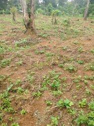 Vente Terrain agricole 2 ha - Ovangoul Mbalmayo