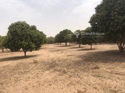 Verger  2,17 hectares - Keur Sadaro