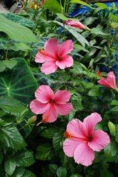 Fleur Hibiscus Lipstick