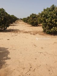 Vente Verger 2 hectares- Notto Gouye Diama