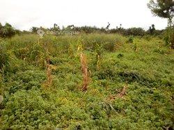 Terrains agricoles  - Cameroun