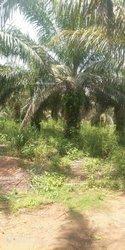 Terrains agricoles 3 ha - Sakété