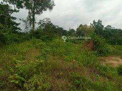 Terrains agricoles 1 ha