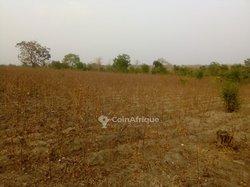 Terrains agricoles 30 hectares - Djidja