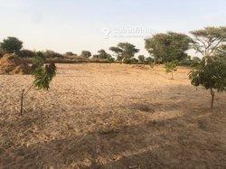 Vente Verger fruitier 1,28 hectare - Keur Matouré Gning