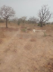 Terrain agricole 5 ha - Koubri