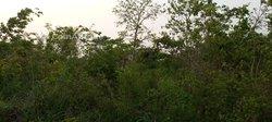 Vente hectares de Terres agricoles - Zio Agbelouve
