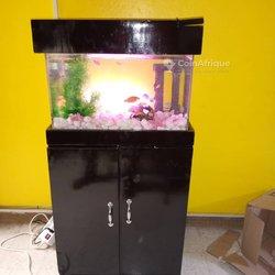 Aquarium féminin