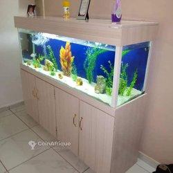 Aquarium plagiste océanique