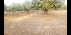 Vente Champ 3 hectares - Ngekokh