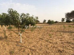 Verger fruitier 1,30 ha - Keur Matar Darou