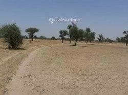 Terrains agricoles 9934 m² - Keur Ibra Sene