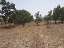 Terrain agricole 4,03 hectares - Ndiobene