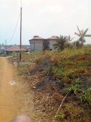 Terrains 1000 m2 - Yaoundé