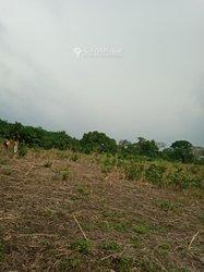 Terrains agricoles - Tsevie-Yobo