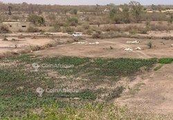 Terrains agricoles 14000 m²  - Mboro