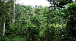 Vente Forêt agricole - Daoukro