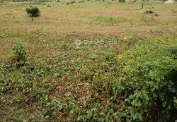 Terrains agricoles - Bingerville