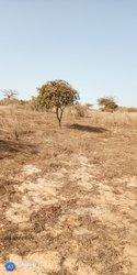 Terrain agricole - Mboro