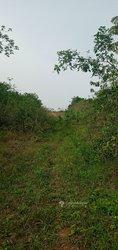 Terrains agricoles 1000 m2 - Lendi Par Goma