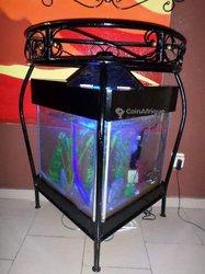 Aquarium Violario