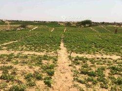 Vente Verger agricole 2,5 hectares - Kayar