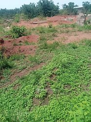 Vente Forêt 1 hectare - Yamoussoukro